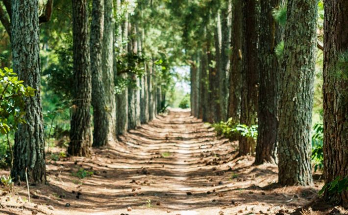 Produtores e Trade destacam potencial do novo atrativo turístico de Araxá