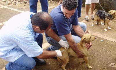 Iniciado vacinação antirrábica animal no perímetro urbano