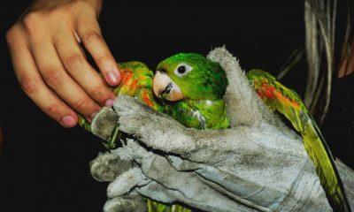Minas Gerais amplia áreas de soltura de animais da fauna silvestre