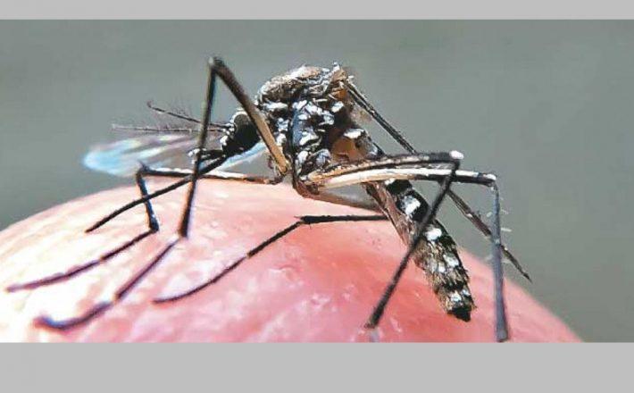 Imunidade adquirida pelo vírus da dengue pode proteger contra o da zika
