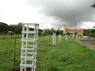 Codemig realiza plantio de espécies nativas em Araxá