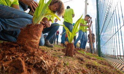 Casa do Pequeno Jardineiro inicia projeto de arborização nas escolas municipais