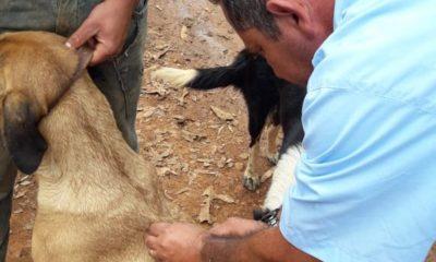 Vacinação Antirrábica começa segunda-feira no perímetro urbano de Araxá