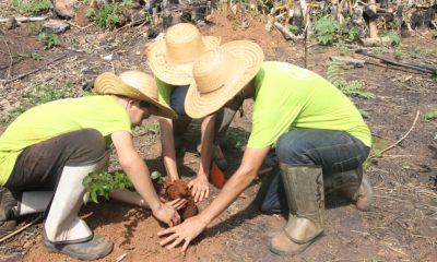 Jovens do Programa Casa do Pequeno Jardineiro plantam mudas em área atingida por incêndio