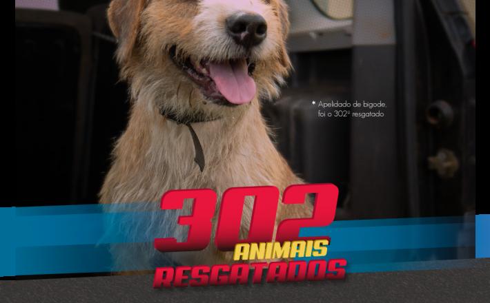 302 animais foram resgatados das ruas de Araxá em 2018