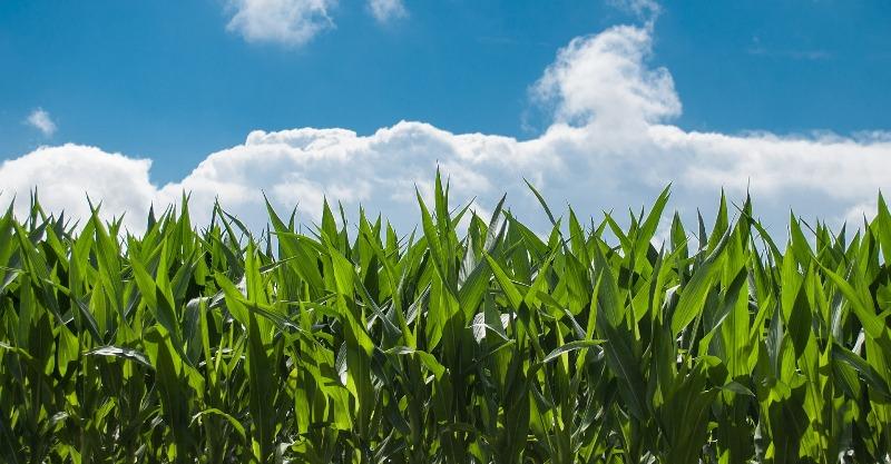 Secretaria de Agricultura lança curso de Zoneamento Ambiental Produtivo (ZAP)