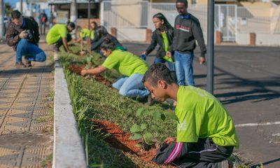 Prefeitura promove plantio de mudas no estacionamento do Estádio Fausto Alvim