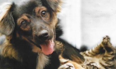 Prefeitura programa Campanha de Vacinação Antirrábica Animal na zona rural