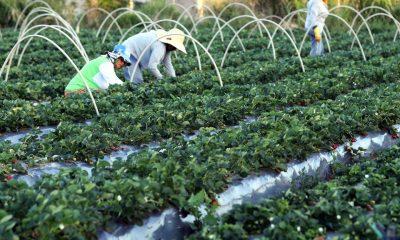 Produtores rurais podem protestar em cartório gratuitamente