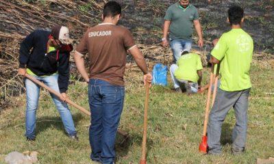 IPDSA e Casa do Pequeno Jardineiro plantam ipês amarelos em área verde da Prefeitura