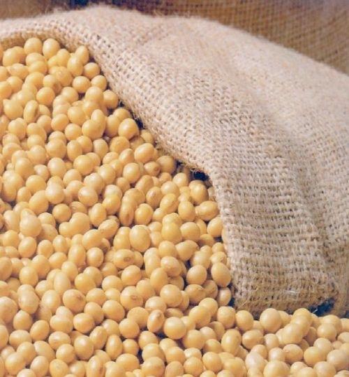 IMA vai fiscalizar cerca de 800 propriedades produtoras de soja