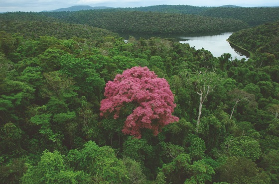 Minas define regras mais justas e igualitárias para distribuição do ICMS Ecológico