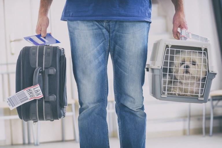 Viagens internacionais com animais de estimação exigem passaporte ou certificado veterinário