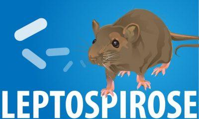 Funed reforça importância de prevenção e diagnóstico da leptospirose