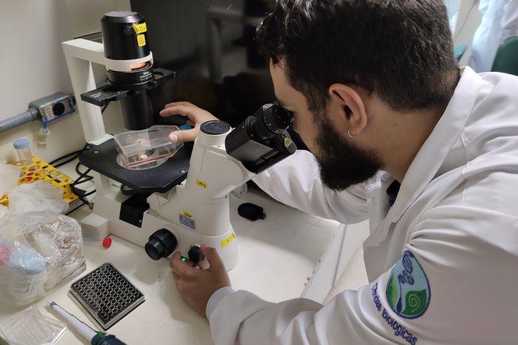Ômega-3 reduz morte de neurônios pelo vírus Zika, diz pesquisa