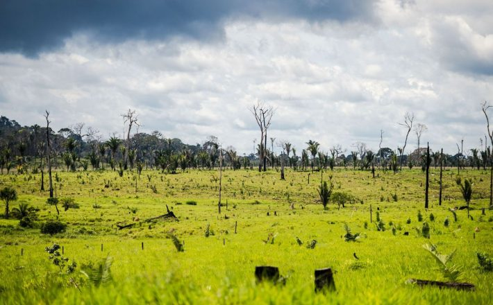 Bolsonaro autoriza uso das Forças Armadas no combate ao desmatamento