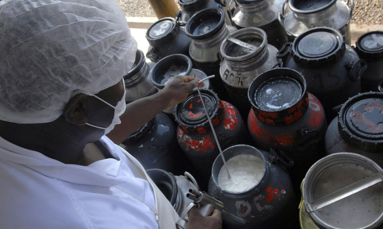 Governo inclui leite no Programa de Aquisição de Alimentos