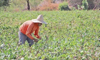 Estado lança programa de fiscalização preventiva na agricultura