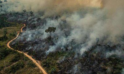 Estado registra redução da área queimada em unidades de conservação