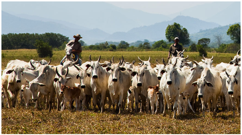 Produção de leite em Minas Gerais foi recorde em 2019