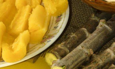 Emater-MG testa cultivares de mandioca em diferentes regiões do estado