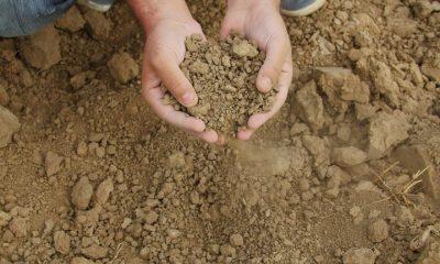 Mais de 197 mil agricultores familiares receberão benefício do Garantia-Safra