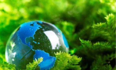 Semana do Meio Ambiente: Agenda Cultural da Cemig tem Mostra e debate sobre o tema