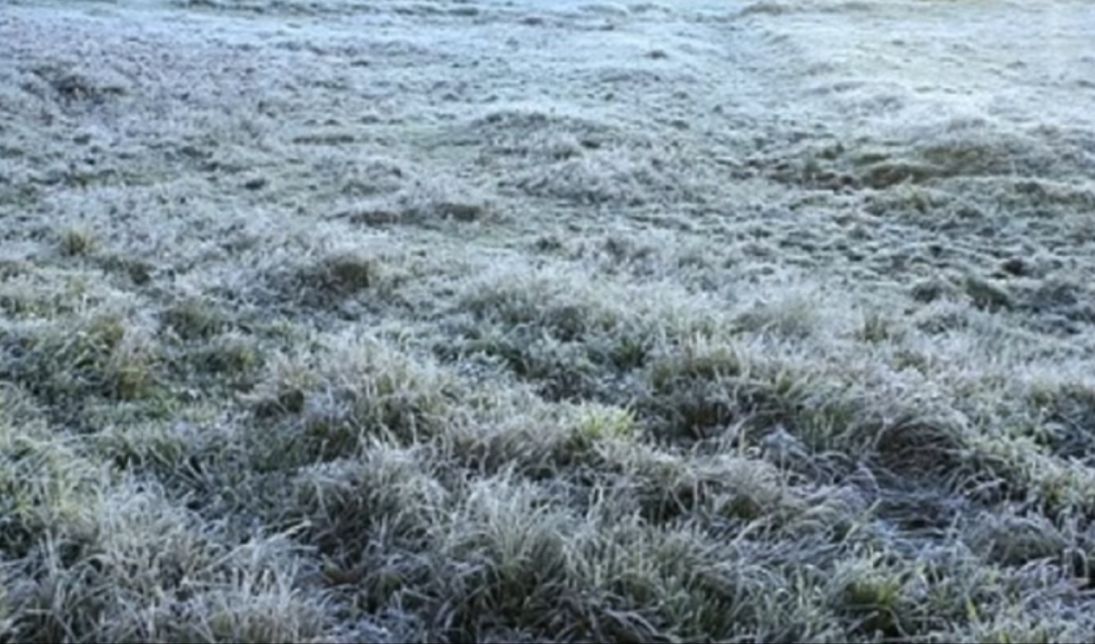 Emater-MG divulga levantamento de área afetada por geadas em pastagens, grãos, frutas, hortaliças e flores