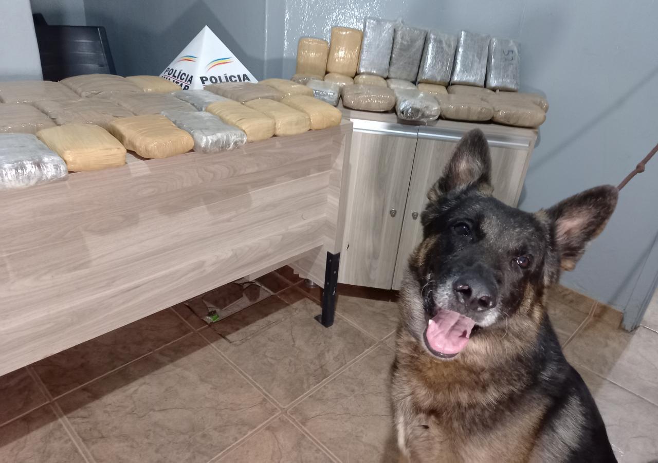 PM prende suspeito de tráfico de drogas e apreende cerca de 30 kg de maconha