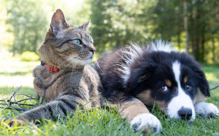 Limpeza e higienização são fundamentais para proteger pets de alergias e doenças de pele