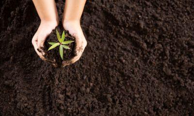 No Dia da Árvore, crianças aprendem sobre a importância do plantio de mudas