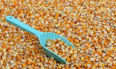 Governo suspende PIS/Cofins na importação de milho para desonerar custo do grão no mercado interno