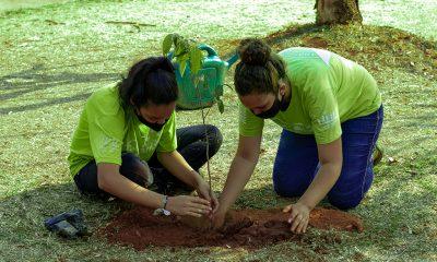 Dia da Árvore é comemorado com plantio de mudas em pontos turísticos de Araxá